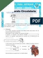 Ficha-El-Aparato-Circulatorio-para-Cuarto-de-Primaria (1)