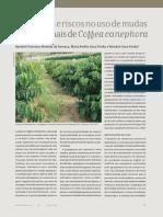 Vantagens e riscos no uso de mudas clonais de Coffea canephora