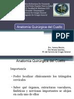 anatomia Quirurgica de cuello definitiva 1 -
