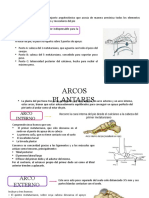 ARCOS PLANTARES