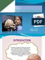 Hemisferios Cerebrales y Su Especialización