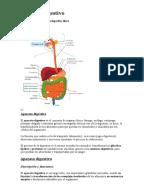 Funciones del duodeno en el aparato digestivo