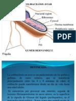 colibacilosisaviar19-100607005924-phpapp02