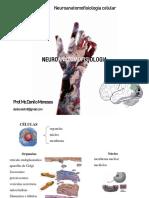 2.Neuroanatomofisiologia celular (1)