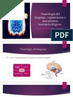Neurología del lenguaje, organización y mecanismos neuropsicológicos