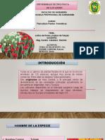 Tulipan Exposicion 2021