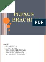 Anato23-Plexus Brachial Pelvien