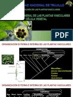 Semana 1 - Célula vegetal