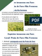 Espécies Invasoras Em Faro