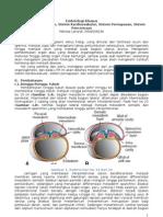 LTM-1. Pembentukan Rongga, Sistem Kardiovaskular an Dan Pencernaan