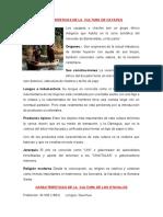 CARACTERÍSTICAS DE LA  CULTURA DE CAYAPAS