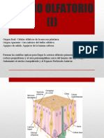 Pares craneales (I,II,III) 2.1