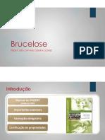 Brucelose+bovina