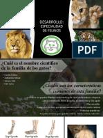 Especialidad Felinos. Pathfinder (1)