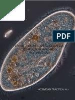 Caracteristicas Generales de Microorganismos Cont-convertido Para Scb
