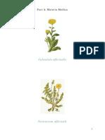 Herbs - Monograph on Marigold & Dandelion