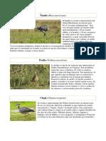 aves_del_uruguay_2