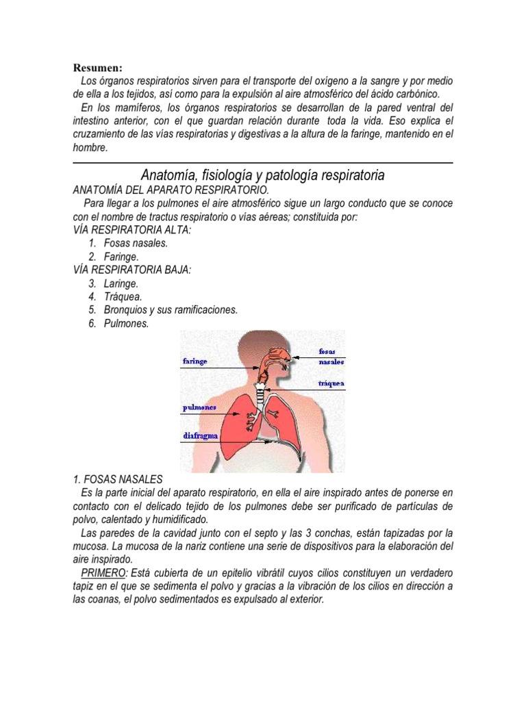 Moderno Anatomía Y Fisiología De La Laringe Cresta - Anatomía de Las ...
