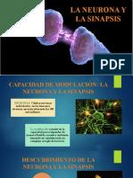 Neurona y Sinapsis
