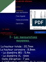 02.1-Les-Incisives-Inferieurs