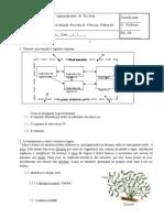 47597414-26344289-Ficha-de-avaliacao-de-CN-8º-Ano-factores-abioticos-e-bioticos-fluxo-de-energia-e-ciclo-de-materia[1]