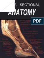 Anatomia Cross Sectional