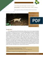 Almeida Et Al._2013_Avaliação Do Estado de Conservação Do Gato-mourisco