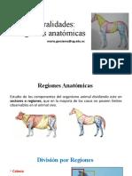 Generalidades Regiones Anatómicas Ok