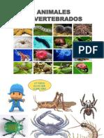ANIMALES-INVERTEBRADOS
