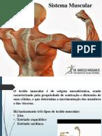 sistema muscular farmácia