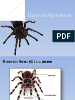 Класс паукообразные