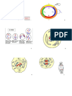 cours et exemples de concours\ispits\S1\Anatomie\3 Fiches Anatomnie la cellule suite (1)... (1)