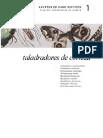 insectos taladradores de la corteza