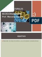 PPT-Ciencias-SEPTIMO-BÁSICO-semana-16-Tipos-de-celula