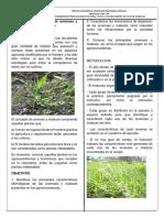 Practica de Identificación de Arvenses y Malezas en Agroecosistemas