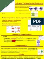 Cópia+de+Transporte+No+Floema