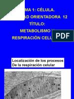 Conferencia 8 Respiracin Celular Profesora Lidia