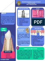 Periodontogenesis y alveologenesis