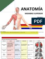 Anatoma Resumenmsculos Miembrosuperior 140209181256 Phpapp02
