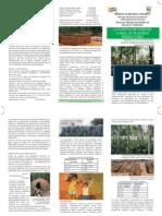 La Plantacion Forestal - PortalGuarani.com