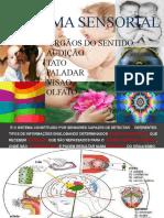 Fdocumentos.tips Orgaos Do Sentido Audicao Tato Paladar Visao Olfato Sistema Sensorial