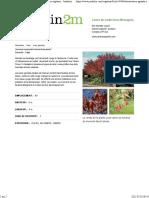Acer ginnala - Érable de L'amur _ Amur Maple
