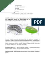 Atividade sobre cloroplastos e mitocôndria
