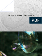 membrana_3