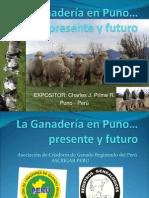Ganadería en Puno-Presente y Futuro por BILLY-PRIME