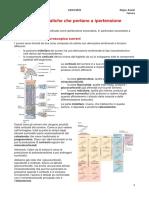 (5) Iperaldosteronismo, feocromocitoma