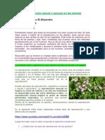 4º1º Reproducción Sexual y Asexual en Las Plantas