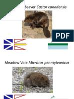 Provincial Mammals
