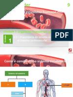 8_cardiovascular