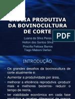 cadeiaprodutivadabovinoculturadecorte-131216213926-phpapp02